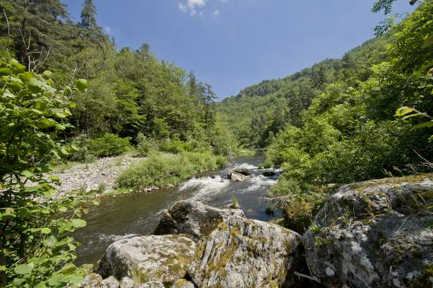 Discover the Allier Gorges
